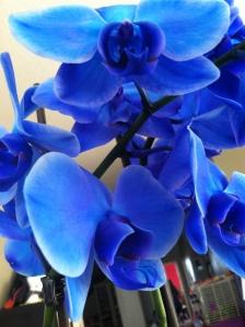 v day flowers3