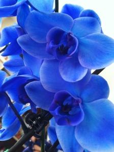 v day flowers5